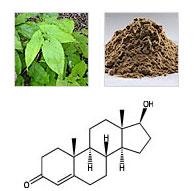 Epimedium Leaf Extract